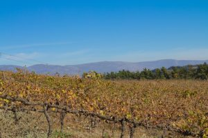 Wein auf dem Weingut Cranefields in Südafrika